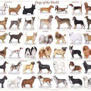 Bảng giá Dịch vụ phối giống chó