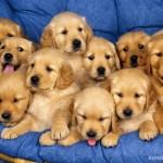 Để tiết kiệm chi phí khi nuôi thú cưng