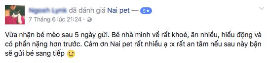 trong-giu-cho-meo-ha-noi-naipet20