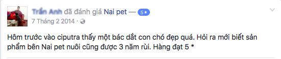 trong-giu-cho-meo-ha-noi-naipet37