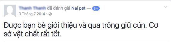 trong-giu-cho-meo-ha-noi-naipet38