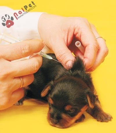 Pet_vaccines_b_0508