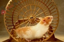 cach-cham-soc-chuot-co-hamster-co-ban-cho-nguoi-moi-nuoi-1