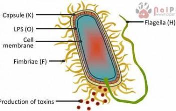 benh-colibacillosis-o-be-nghe 1