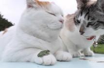 Thú cưng của đại ca mèo Shironeko