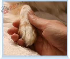 tiem-nhan-dao-tro-tu-thu-y-euthanasia-3