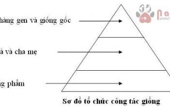 to-chuc-cong-tac-giong-gia-cam 1