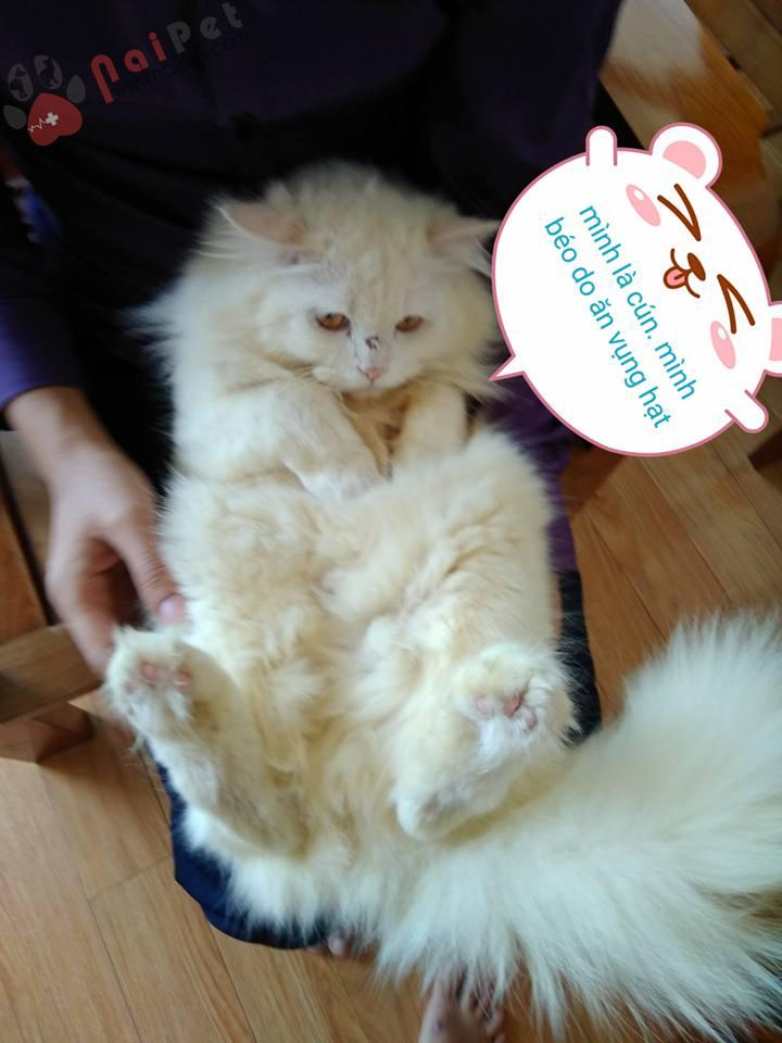 0376-my-tom-meo-anh-long-dai-trong-giu-thu-cung-nai-pet