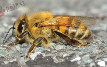 cach-phong-va-tri-benh-cho-ong