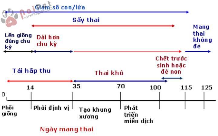 chan-doan-cac-nguyen-nhan-truyen-nhiem-gay-roi-loan-sinh-san-o-heo 3