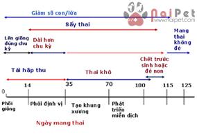 chan-doan-cac-nguyen-nhan-truyen-nhiem-gay-roi-loan-sinh-san-o-heo 8