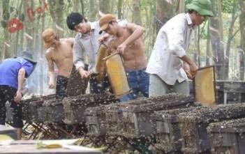 huong-dan-nuoi-ong-can-ban