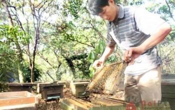 khang-sinh-moi-tri-benh-nhiem-khuan-o-ong-500x334