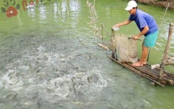 nuoi-ca-nuoc-ngot-tu-ba-thai-ham-biogas