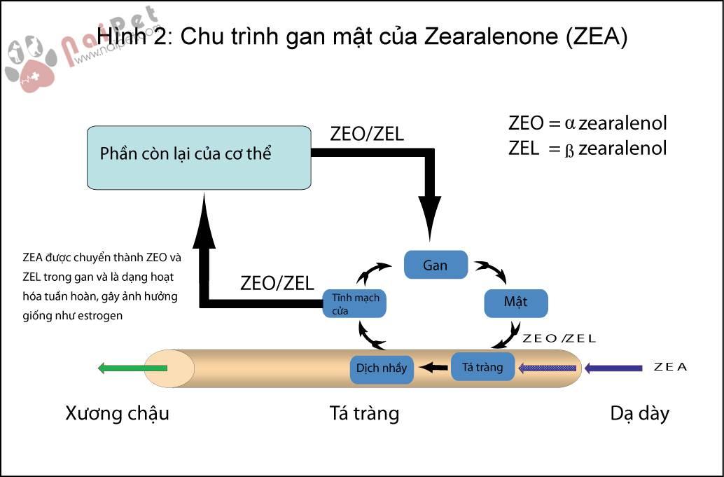 zeralenone-lam-giam-hap-thu-dinh-duong-o-heo-con 1